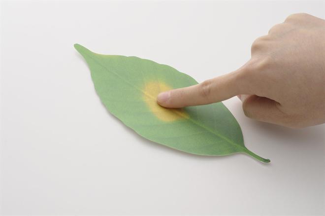 温度で変化する葉で壁を飾ろう Leaf サーモメーター001