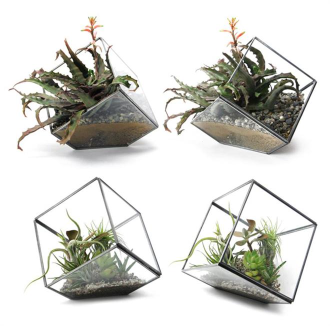 四角いガラスのテラリウム DETAIL GEO TERRARIUM005
