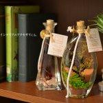 色とりどりの草花や貝と香りをボトルに閉じ込めたオイルランプ Collines de Provence オイルランプ Aシリーズ