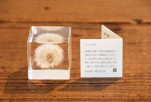sola cube002