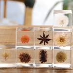 透明なアクリルに植物を閉じ込めた「sola cube」