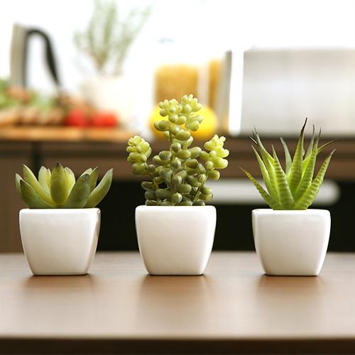succulent001
