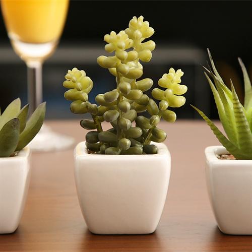 succulent002